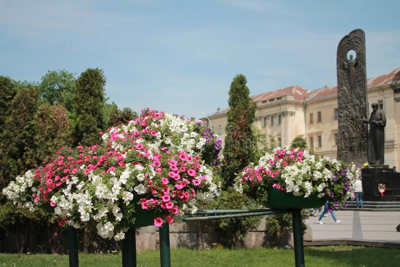 Flower, Plant, Flowering Plant, Flora stock image