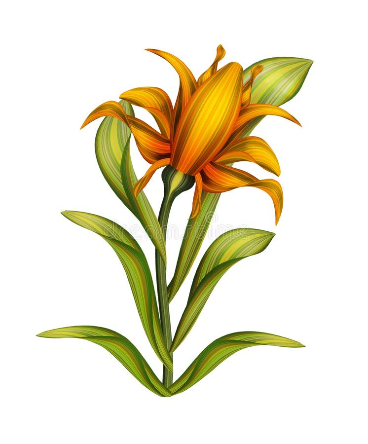 Flower, Plant, Flowering Plant, Lily stock photo