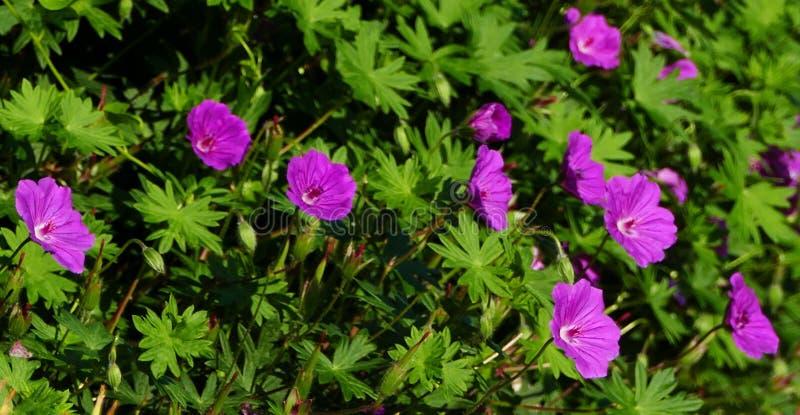 Flower, Plant, Flowering Plant, Flora Free Public Domain Cc0 Image
