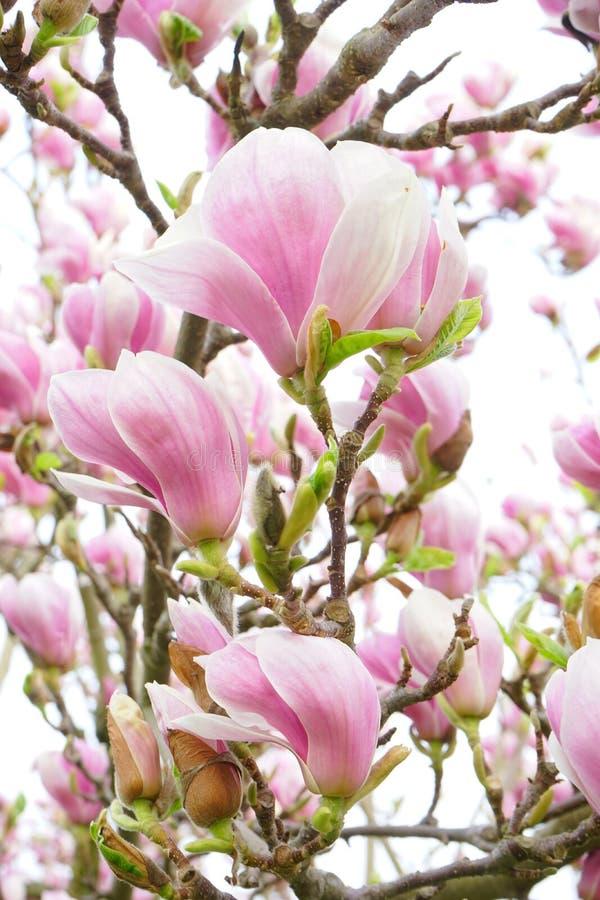 Flower, Plant, Flowering Plant, Pink Free Public Domain Cc0 Image