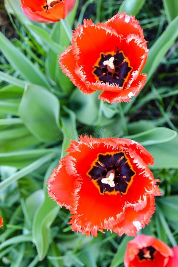 Flower, Plant, Flowering Plant, Wildflower Free Public Domain Cc0 Image