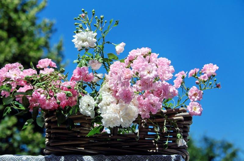 Flower, Plant, Flowering Plant, Spring stock photo