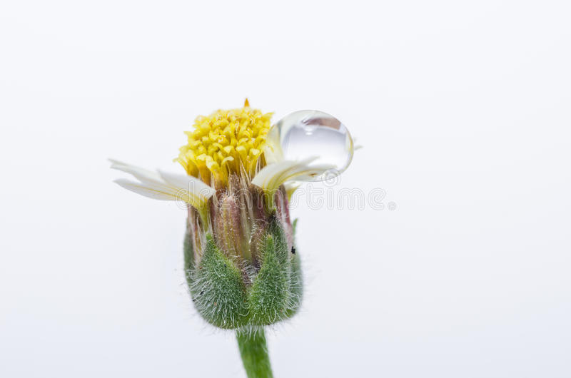 Download Flower plant grass stock image. Image of flora, growth - 34217643
