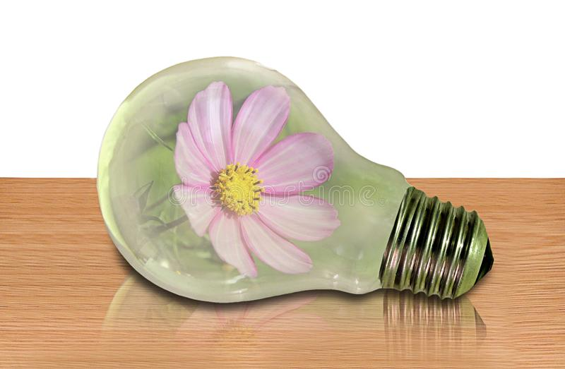 Flower plant in a light bulb idea hothouse greenhouse concept. Photo concept of a flower plant in a light bulb resting on a ished table depicting greenhouse stock photography