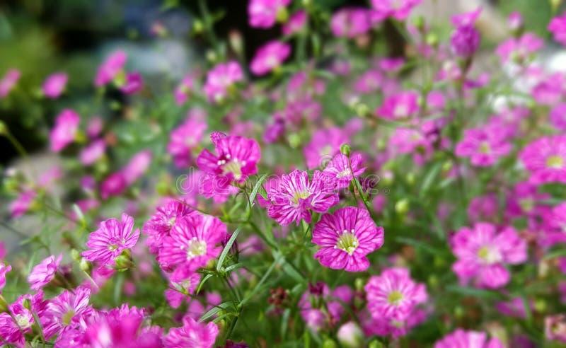 Flower, Plant, Pink, Flora Free Public Domain Cc0 Image