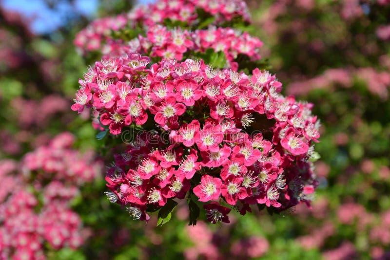 Flower, Plant, Pink, Flowering Plant stock photo