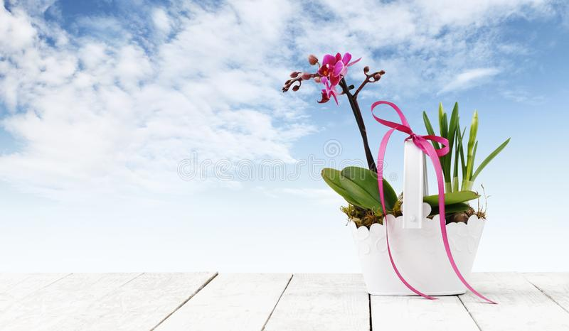 Flower plant in pot with ribbon isolated on white wood table and sky background, web banner with copy space for florist shop royalty free stock photography
