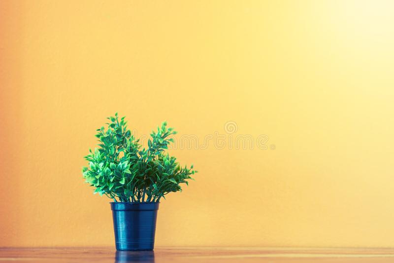 Flower and plant in pot on table stock image