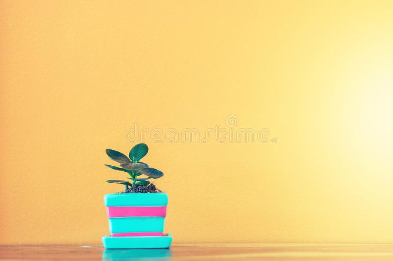 Flower and plant in pot on table royalty free stock photos