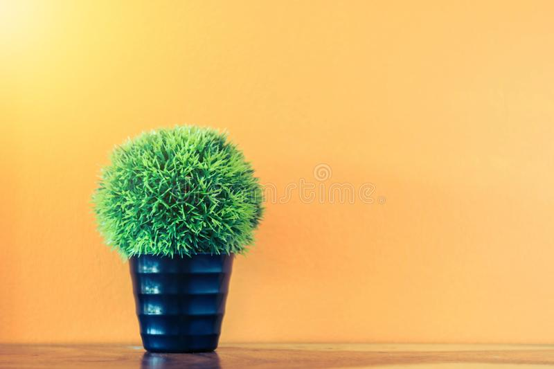 Flower and plant in pot on table. With colorful background royalty free stock image