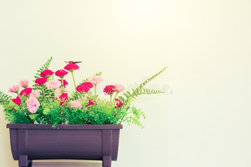 Flower and plant in pot on table stock images