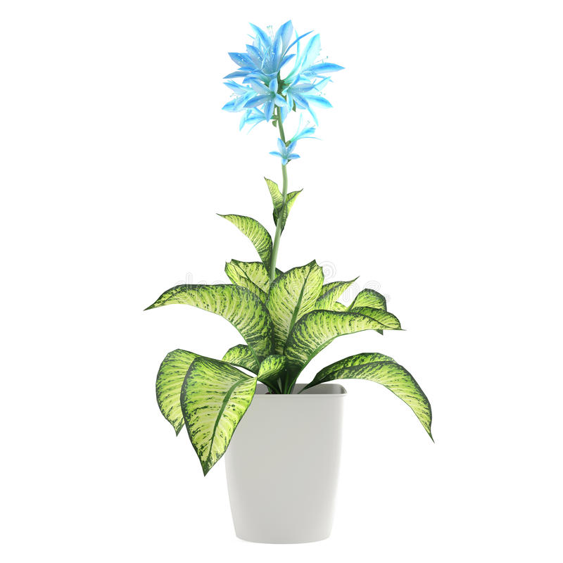 Flower Plant In The Pot Stock Image