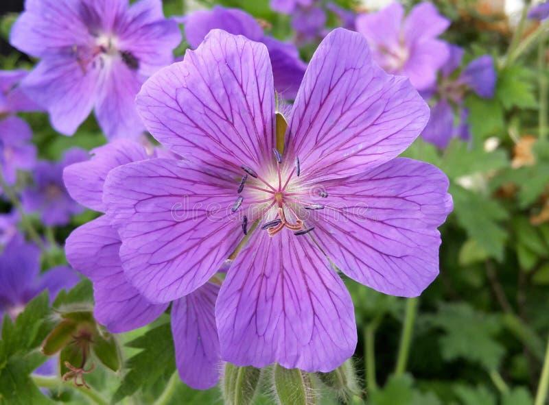 Flower, Plant, Purple, Flora stock photos