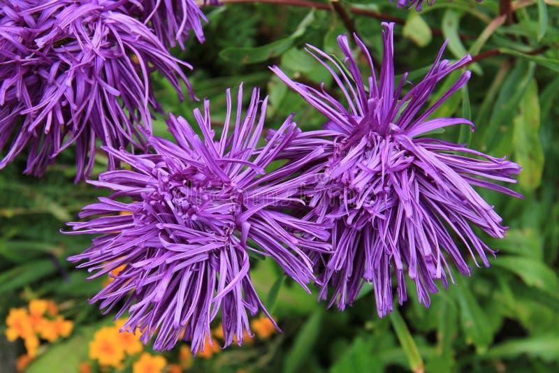 Flower, Plant, Purple, Flora Free Public Domain Cc0 Image