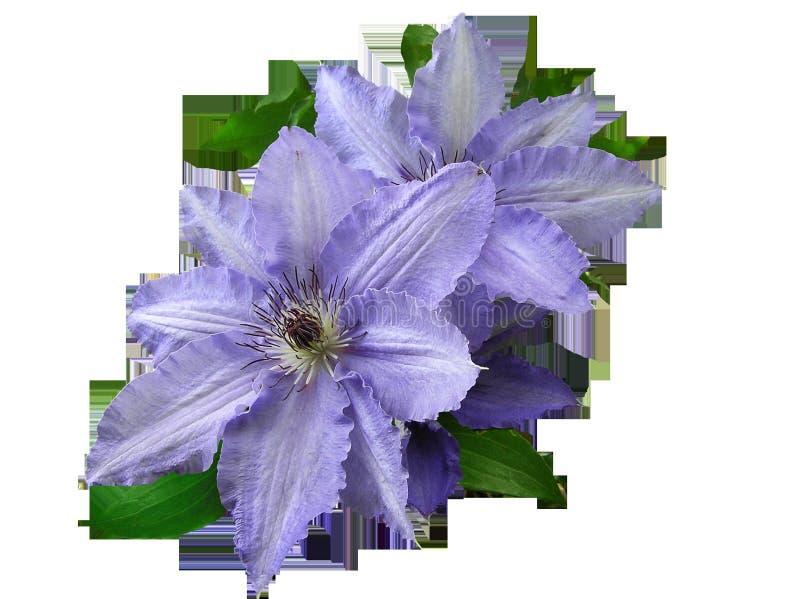 Flower, Plant, Purple, Violet Free Public Domain Cc0 Image