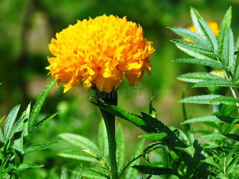 Flower, Plant, Safflower, Annual Plant Free Public Domain Cc0 Image
