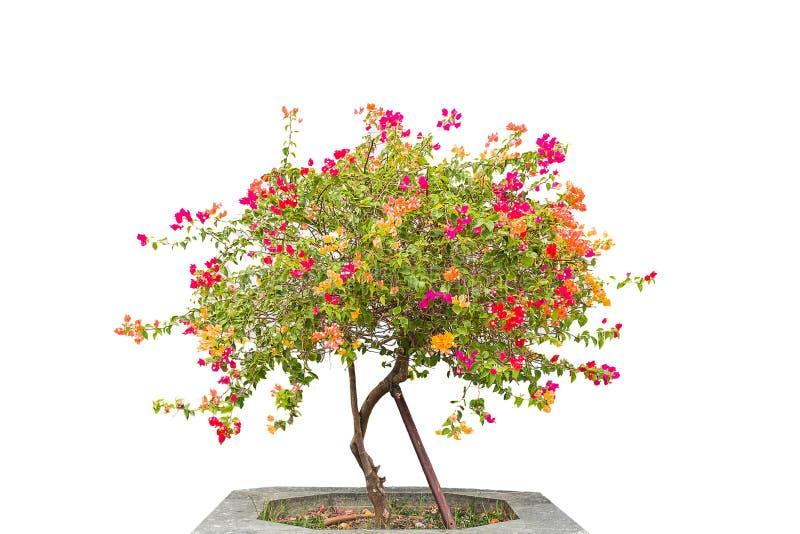 Flower plant. On white background stock photos