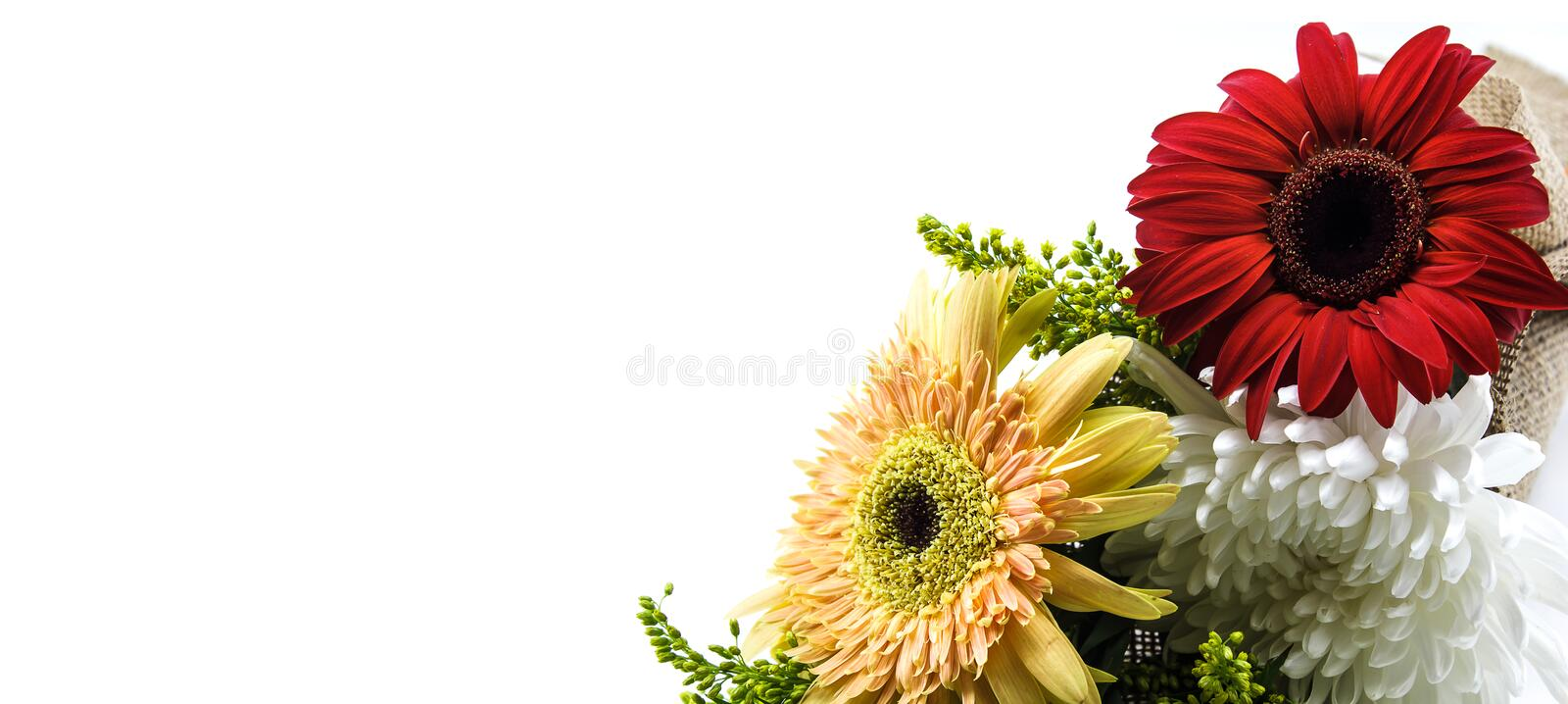 Flower and plant. On white background with copy space royalty free stock photo