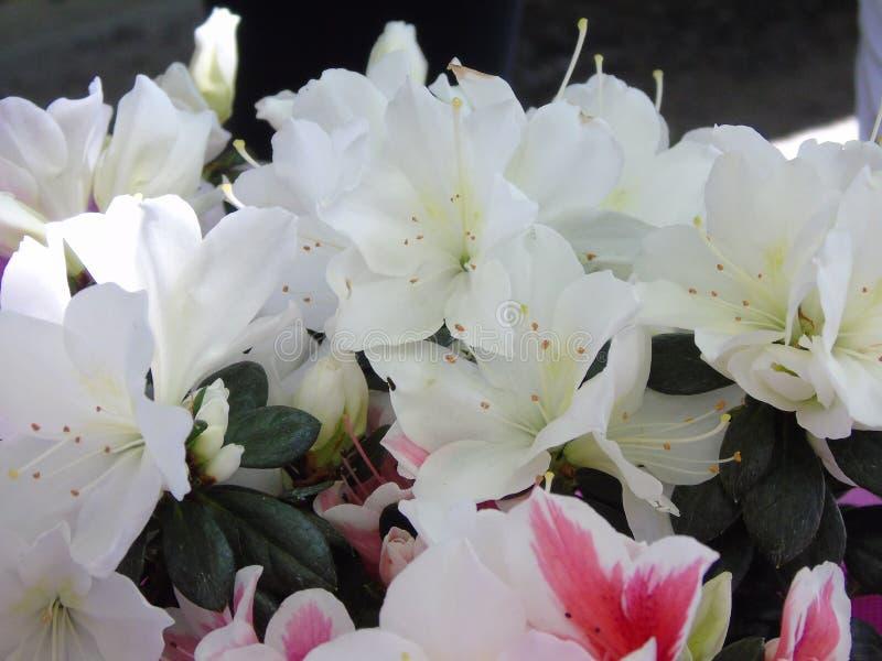 Flower, Plant, White, Pink Free Public Domain Cc0 Image