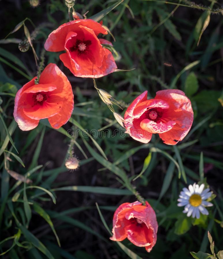 Flower, Plant, Wildflower, Flora Free Public Domain Cc0 Image