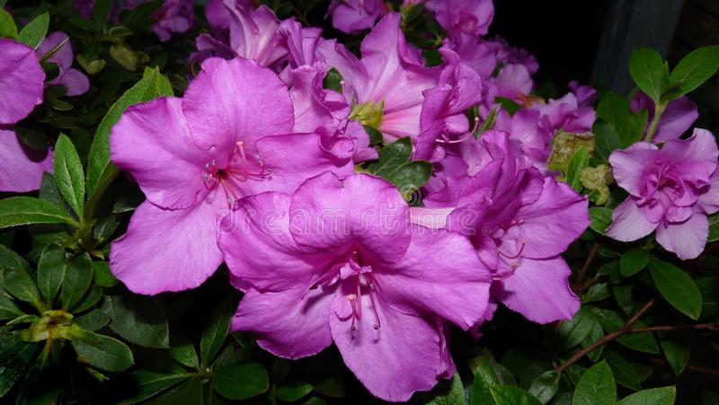 Flower, Plant, Woody Plant, Flowering Plant Free Public Domain Cc0 Image