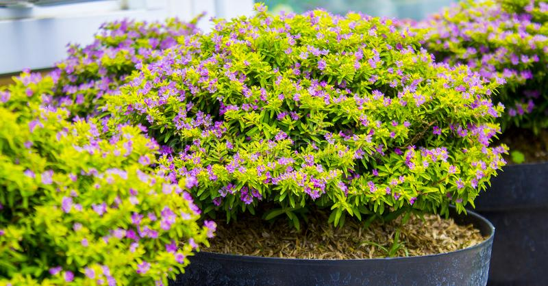 A Flower Plant in a Pot royalty free stock images