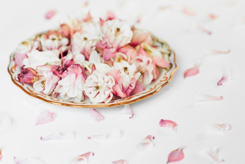 Flower plates composition stock photos