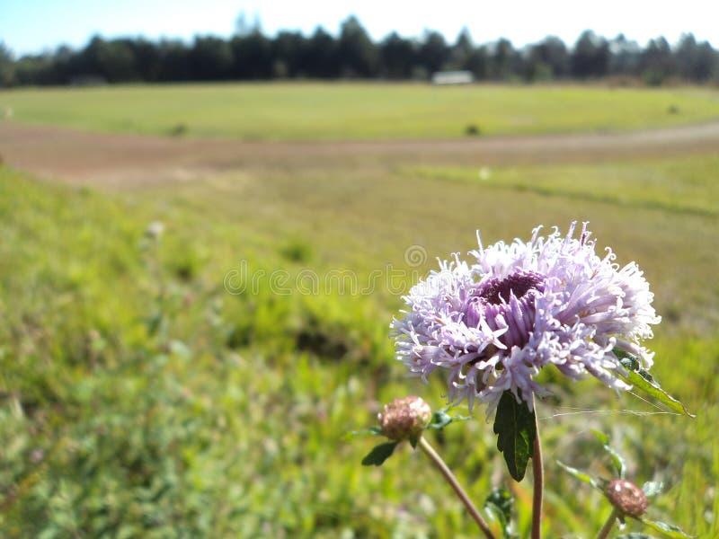 Flower posing near a soccer field royalty free stock image