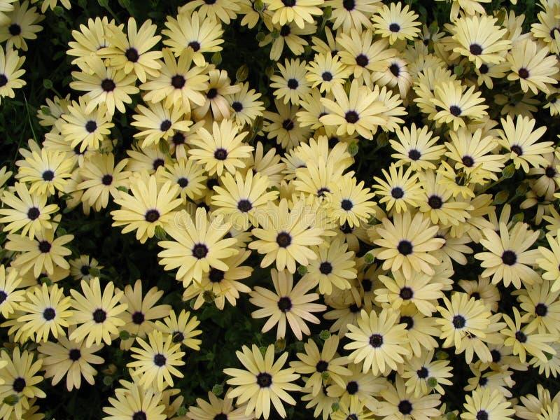 Download Flower Postcard Stock Photos - Image: 170083