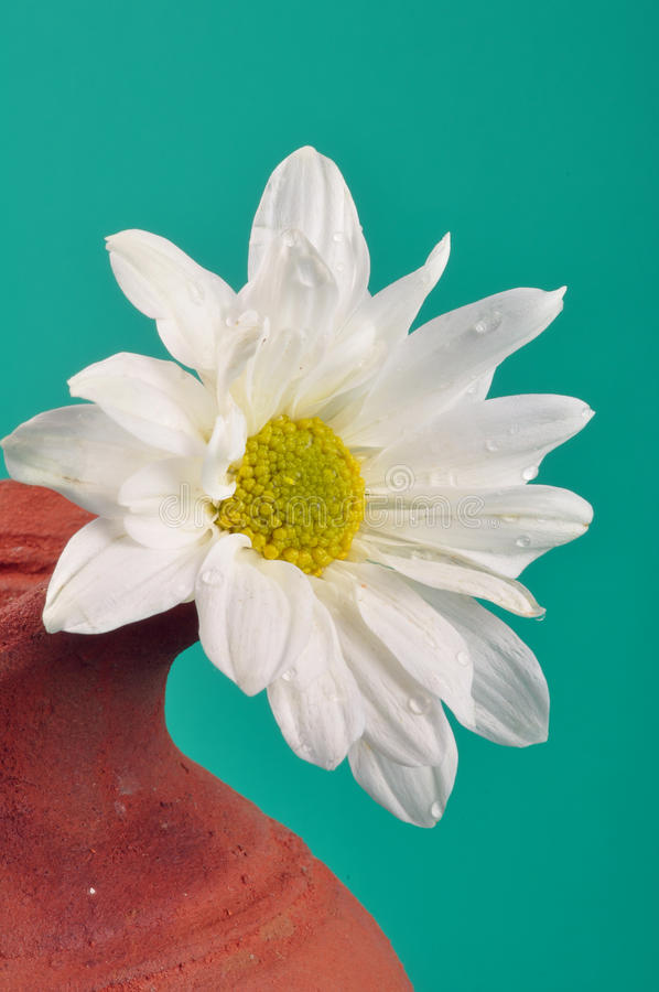 Flower Pot Stock Photos