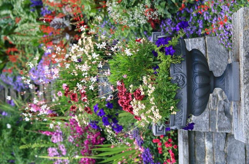 Flower-pot royalty-vrije stock afbeelding
