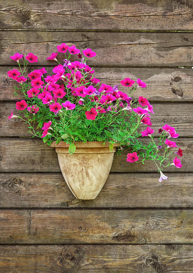 Flower pot. On a brown wooden wall stock photography