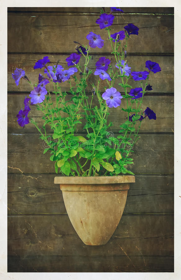 Flower pot. On a brown wooden wall stock photos