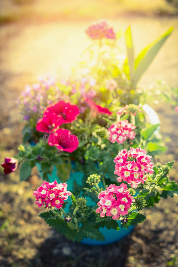 Flower pot with garden deco flowers in sunlight royalty free stock photos