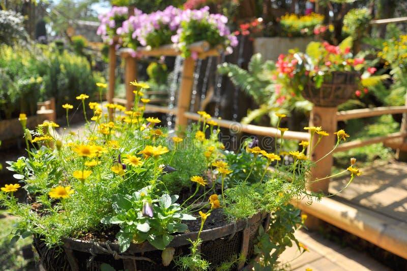 Flower Pot Gardening. In Thailand stock photography