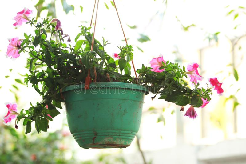 Flower pot hanging in a building stock photography