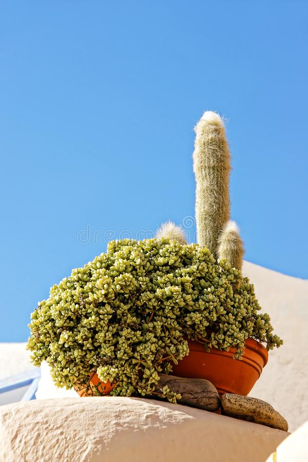 Flower pot with several kinds of cacti on outdoor terrace of house royalty free stock photo