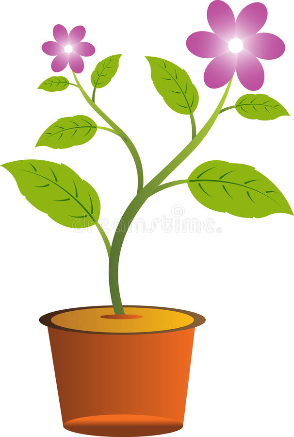 Flower with pot vector illustration