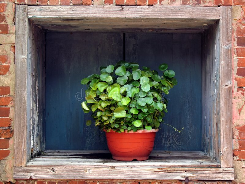 Flower Pot in a Window royalty free stock photography