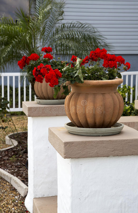 Download Flower Pots And Flowers stock photo. Image of pots, garden - 31112852
