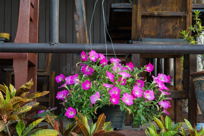 Flower pots hanging on porch royalty free stock image