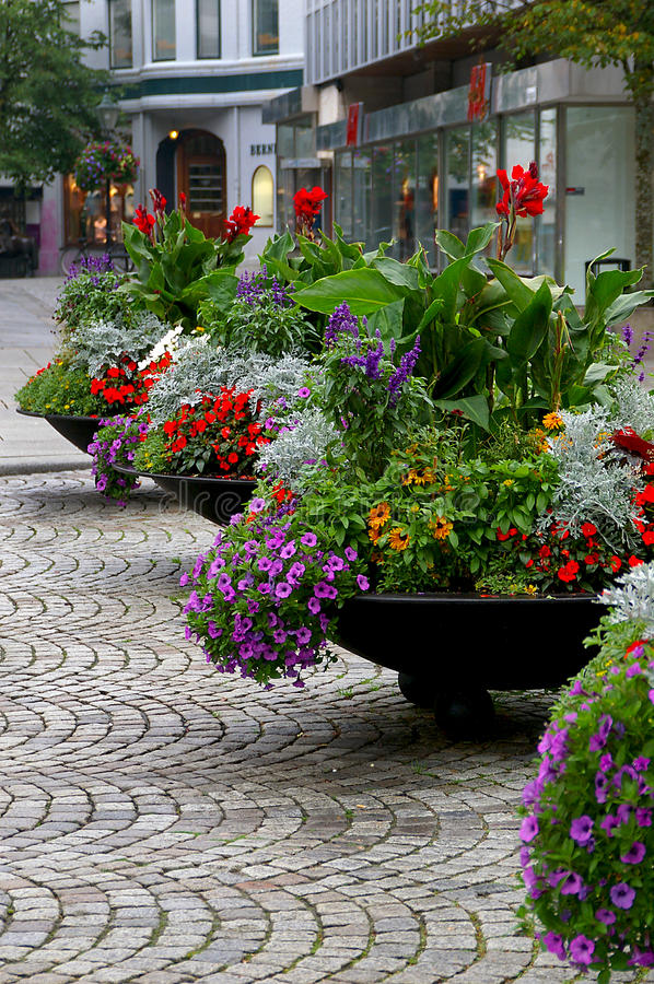 Free Flower Pots In Full Bloom Royalty Free Stock Image - 28419706