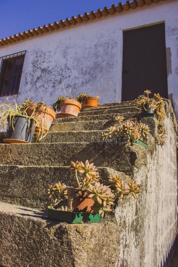 Flower pots nn outdoor stairs with close door. Patio design. Traditional backyard in Europe. Flowers on outdoor steps. Home entrance with flowers. Architecture stock photography