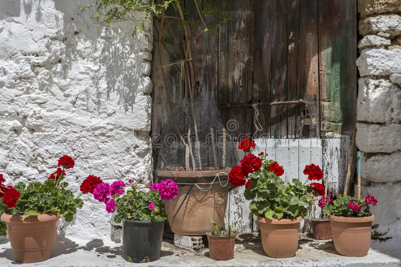Flower pots and old house wall stock photo