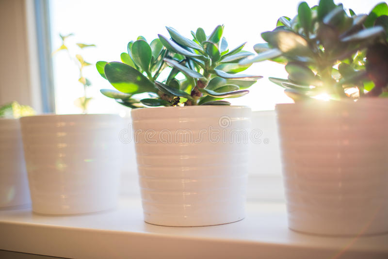 Flower pots in window stock photos