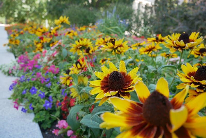 Flower power imagens de stock royalty free
