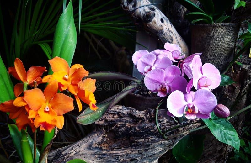 Flower power royalty-vrije stock fotografie