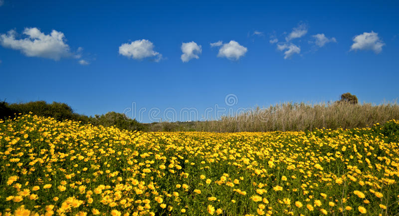 Download Flower Power Stock Photography - Image: 18371392