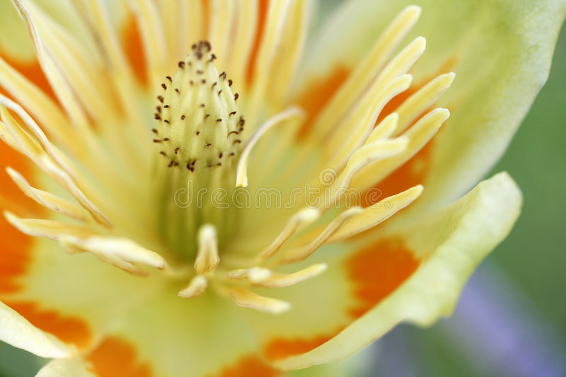 Flower Power stock images
