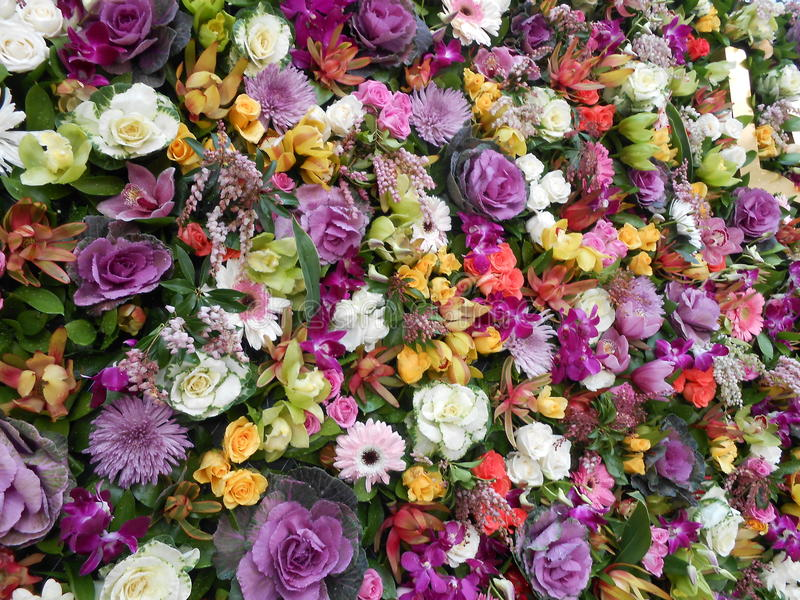 Flower power royalty-vrije stock foto